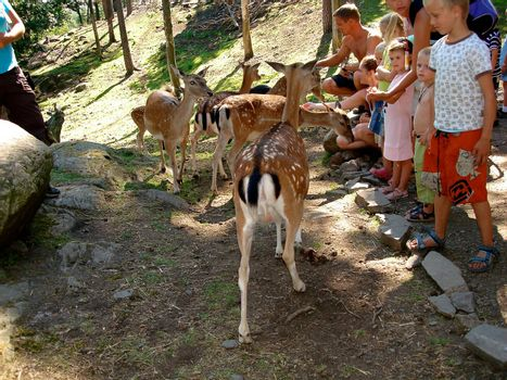 children feeding deers. Please note: No negative use allowed.