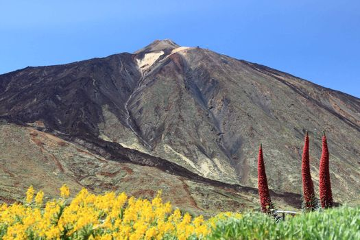 Tenerife Mountain, Volcano Mount Teide showing Pico del Teide and flowers landscape. Canary Islands, Spain.
