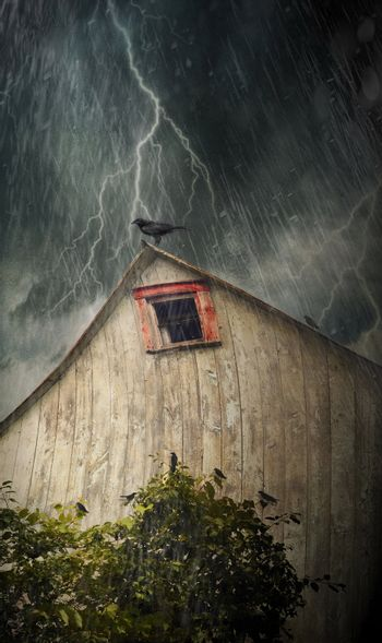 Spooky old barn with crows on a stormy night