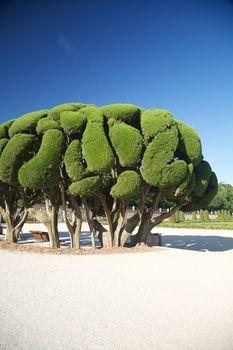 beautiful tree in Madrid park