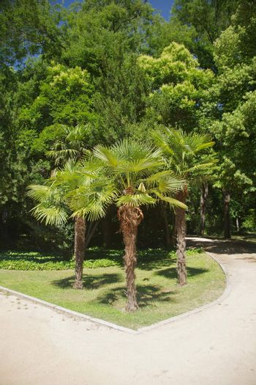three palms at woodland