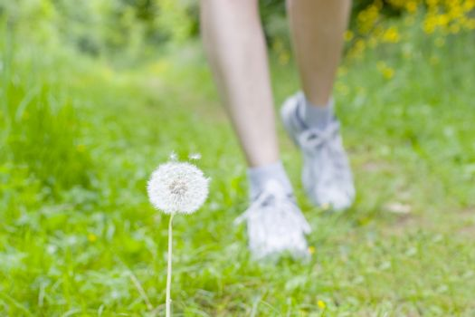 Feet of a running woman in green grass - focus on the blowball in the foreground