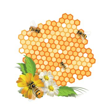 Illustration, bee on flower and honeycomb with honey