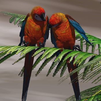 Two Cuban Red Macaws have a close bond and are tender with each other.