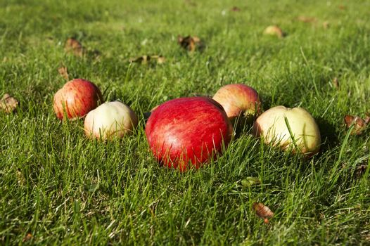 Red interesting colored apple on grass