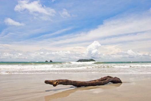 Log at the beach on Manuel Antonio Beach, Costa Rica.