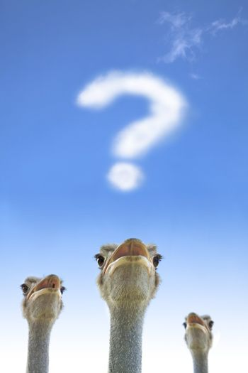 question and thinking  concept. ostrich watching question mark