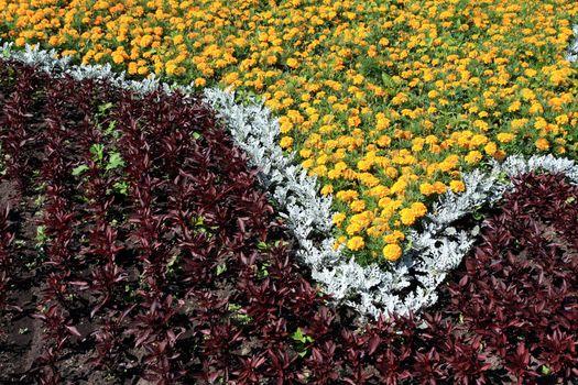 flowerses on lawn