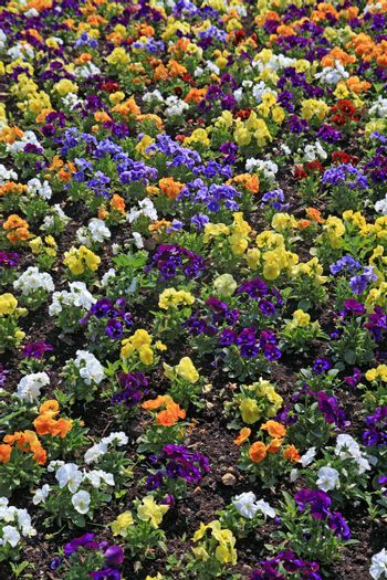 decorative flowerses on town lawn