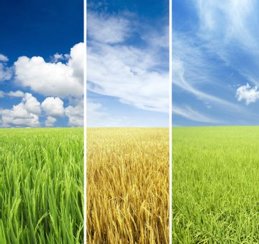 Agricultural seasons