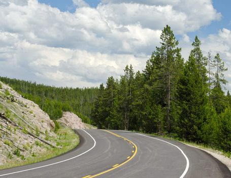 The Grand Loop Road and Pines, Yellowstone National Park, Park County, Wyoming, USA