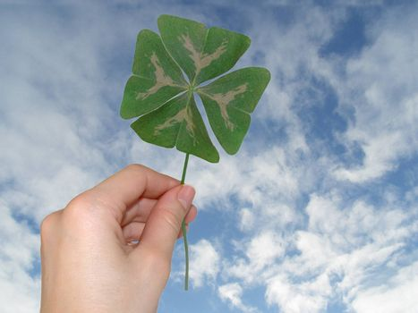 Green clover in female hand against blue sky