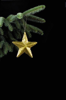 Gold star on spruce branch