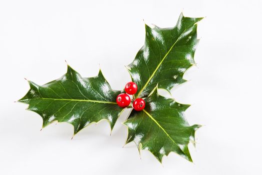 Holly leaf with red berries