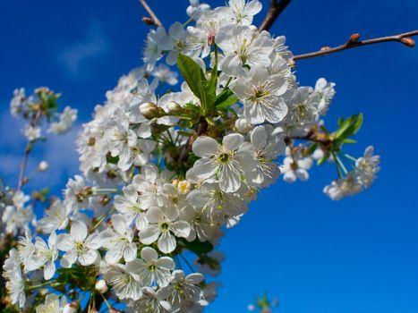 flourish cherry brunch