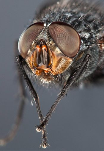 Photo of a fly close up on the dark