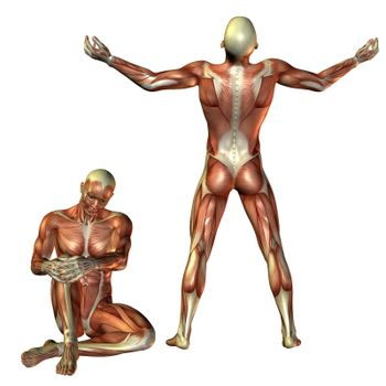 Muscle man sitting and standing