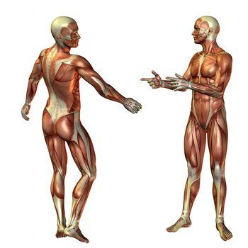 Muscular man standing structure