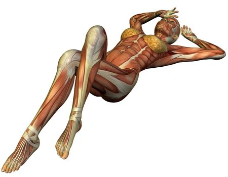 Muscle structure of a supine woman