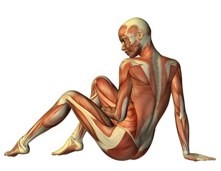 Muscle seated woman from behind