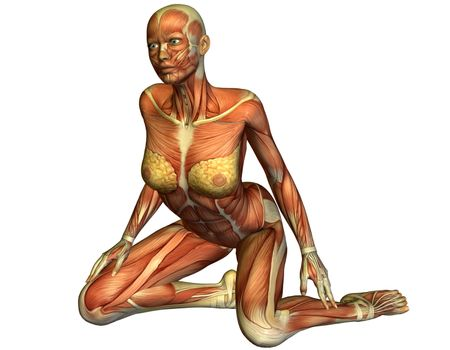Muscle of a kneeling woman