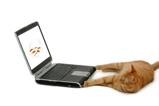 Cat and laptop