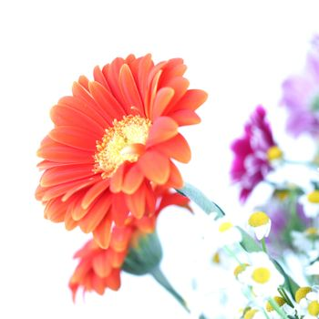 colourful summer flowers