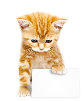 very small redhead kitty on white background