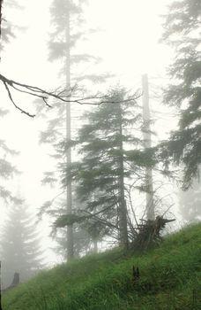 deep fog