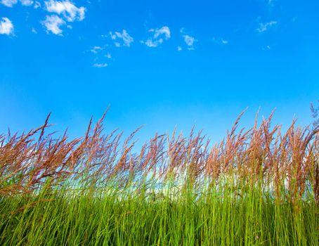 Grassy View