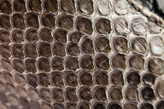 Background, texture of a skin of a snake close up