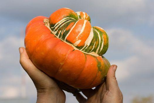 autumn vegetables clouds fall sky pumpkin decoration