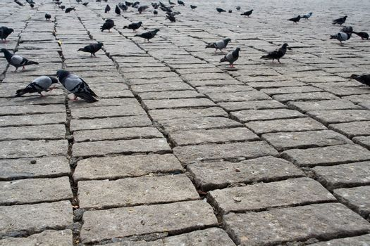 brick pigeon sidewalk urban city animal life