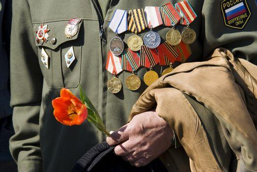 hand of war veteran with tulip