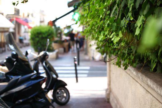 foliage passage