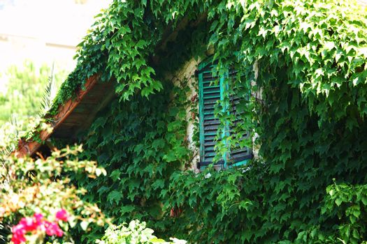 foliage window