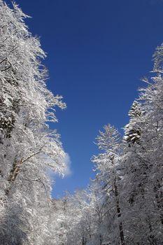 Winter landscape trees under snow