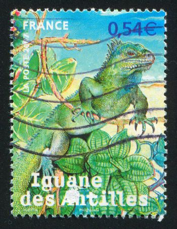 FRANCE - CIRCA 2007: stamp printed by France, shows Endangered animals overseas departments, circa 2007