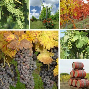 wine culture collage, Toscana