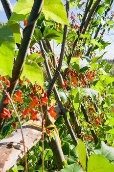 Flowers decorative bean