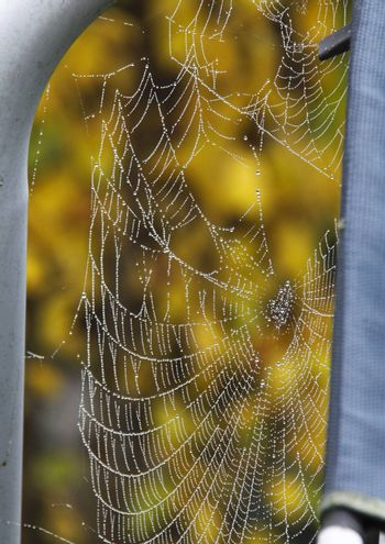 cobweb covered in dew drops from a misty morning