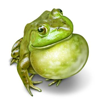 Frog Inflated Throat
