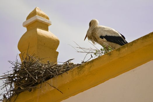 Stork in top of one church roof