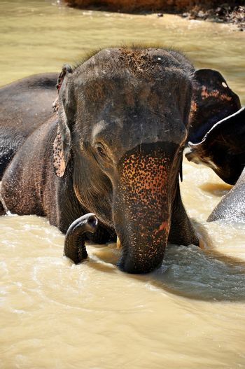Elephants are the largest living land animals on Earth today.