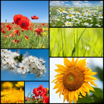 Beautiful spring flowers collection.