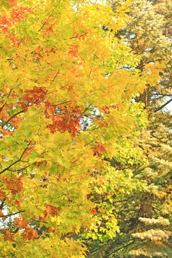 Colors of the october foliage