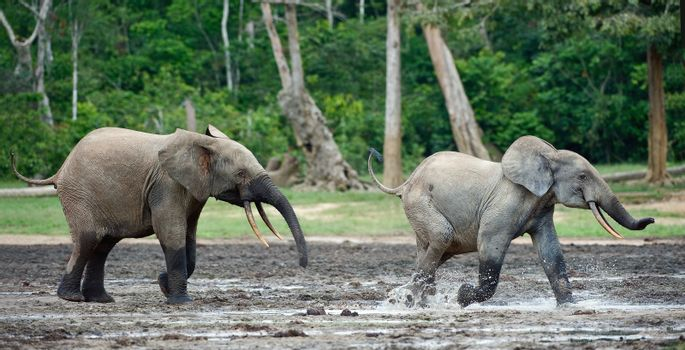 Attack of an elephant.