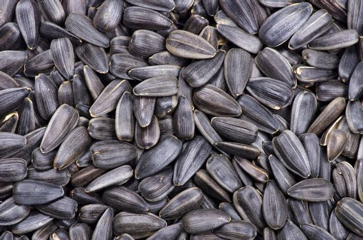 seeds for backgrounds