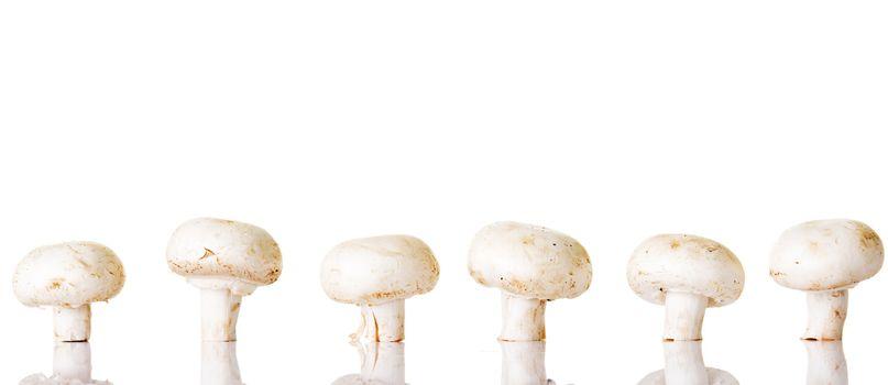 Edible button mushroom, champignon