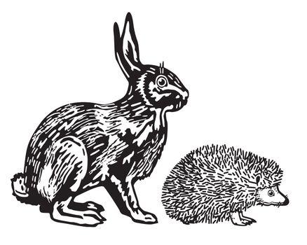 Hare and Hedgehog